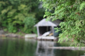 Boathouse, Lake of the Woods, close focus on tree