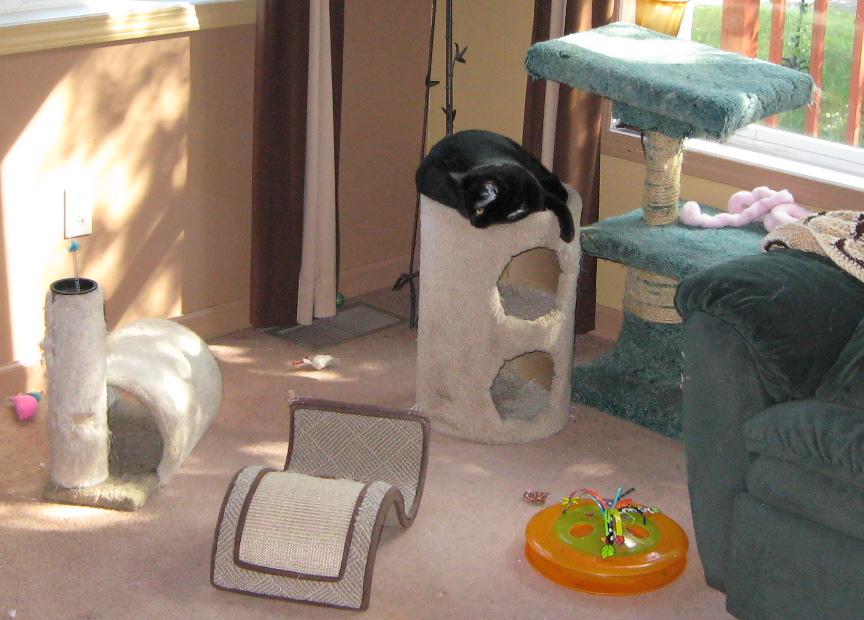 cat-play-area-and-ishka_cr