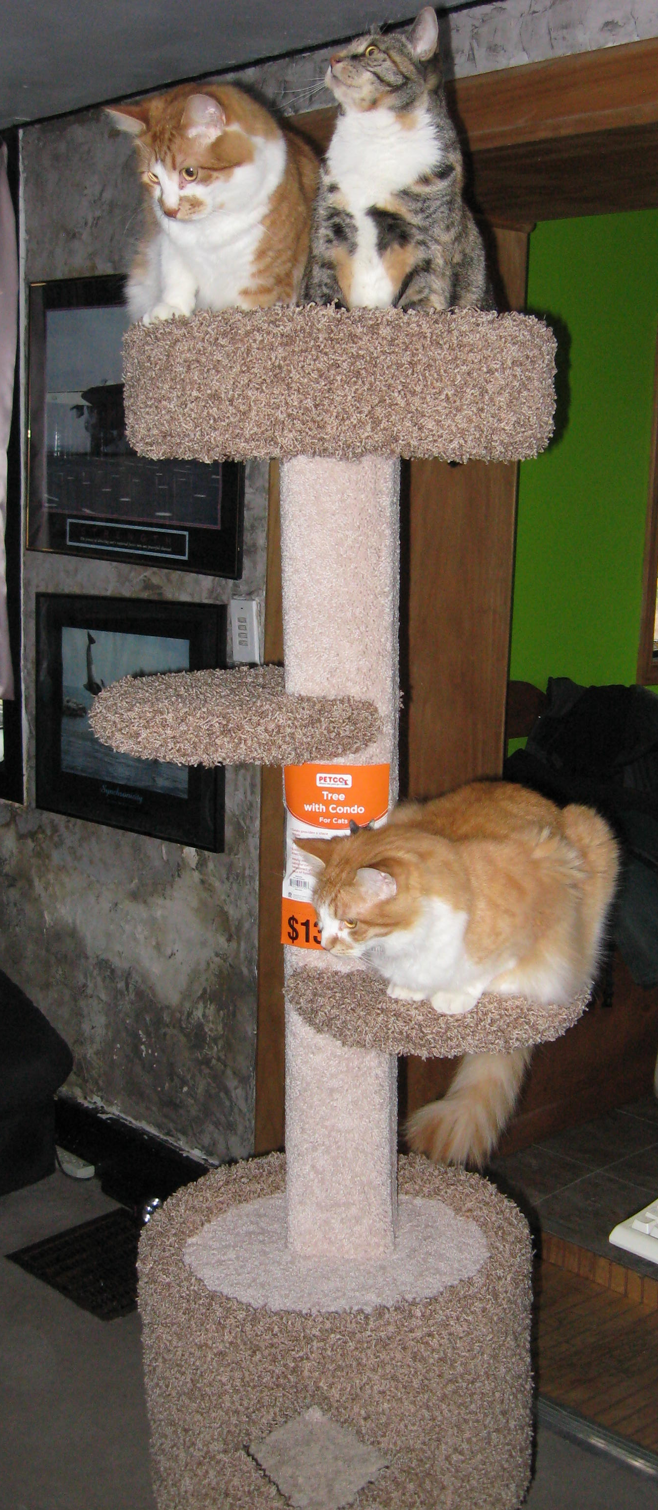 Cat Condo & Scratching Area