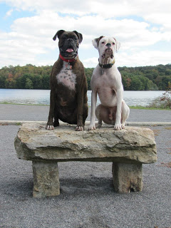 dogs-at-trail-at-prince-gallitzin-state-park-pa