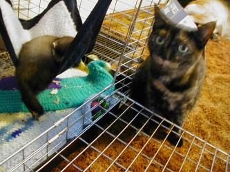 Ezri and ferrets