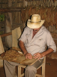 Man rolling a cigar in front of a tobacco barn.